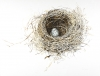 Nest Farthingfeather Small Print