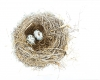 Nest Jacquimo Small Print